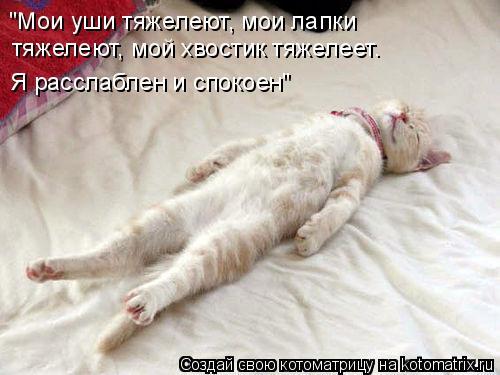 "Котоматрица: ""Мои уши тяжелеют, мои лапки  тяжелеют, мой хвостик тяжелеет. Я расслаблен и спокоен"""