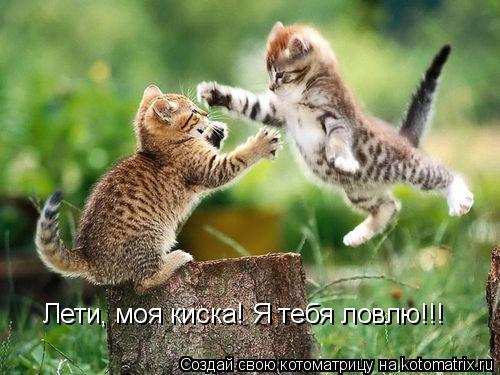 Котоматрица: Лети, моя киска! Я тебя ловлю!!!