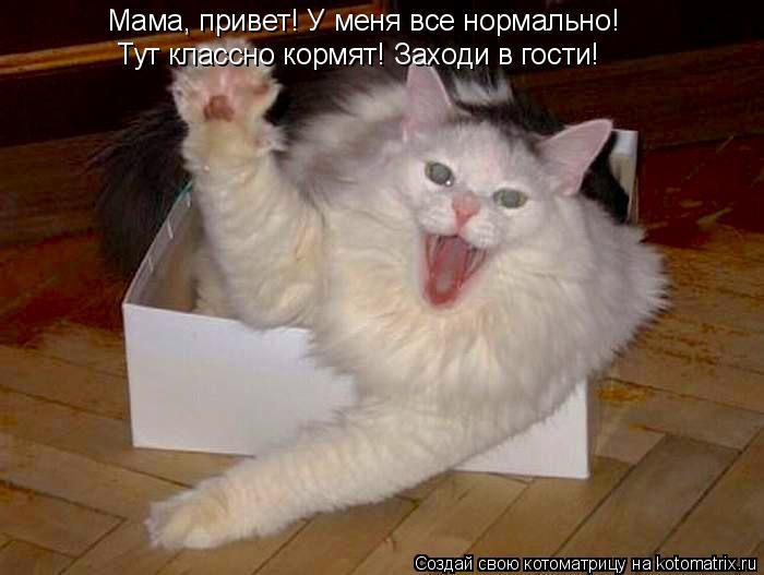 Котоматрица: Мама, привет! У меня все нормально! Тут классно кормят! Заходи в гости!