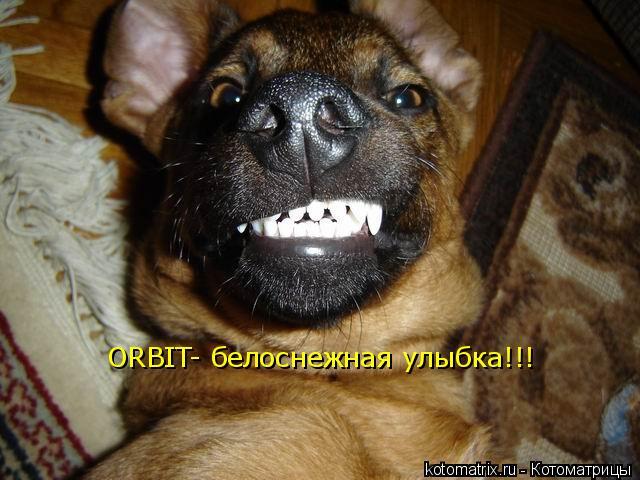 Котоматрица: ORBIT- белоснежная улыбка!!!