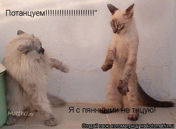 "Котоматрица: Потанцуем!!!!!!!!!!!!!!!!!!!!!"" Я с пяннными не тнцую!№"
