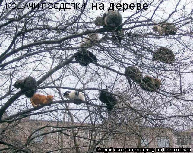 Котоматрица: КОШАЧИ ПОСДЕЛКИ на дереве