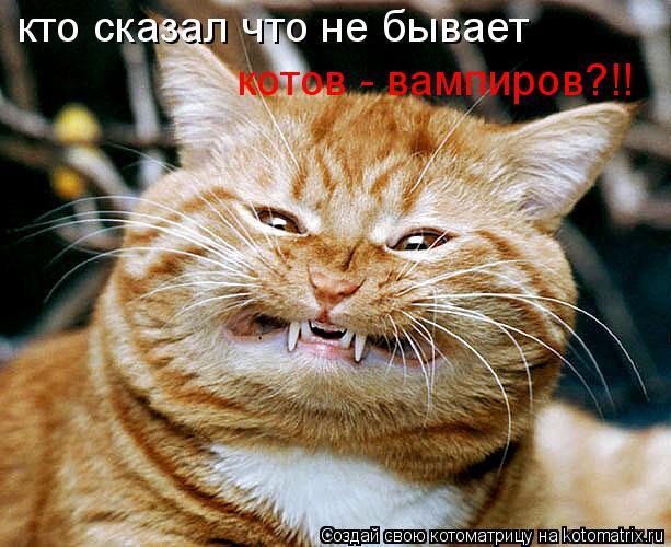 Котоматрица: кто сказал что не бывает котов - вампиров?!!