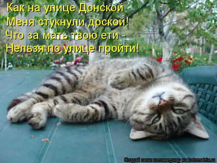 Котоматрица: Как на улице Донской  Меня стукнули доской!  Что за мать твою ети - Нельзя по улице пройти!