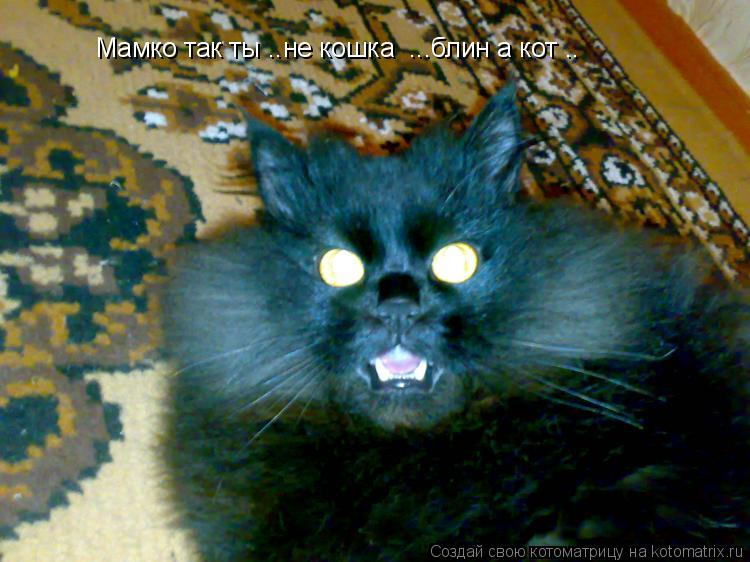 Котоматрица: Мамко так ты ..не кошка  ...блин а кот ..