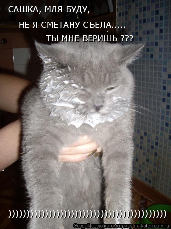 Котоматрица: САШКА, МЛЯ БУДУ, НЕ Я СМЕТАНУ СЪЕЛА..... ТЫ МНЕ ВЕРИШЬ ??? )))))))))))))))))))))))))))))))))))))))))))