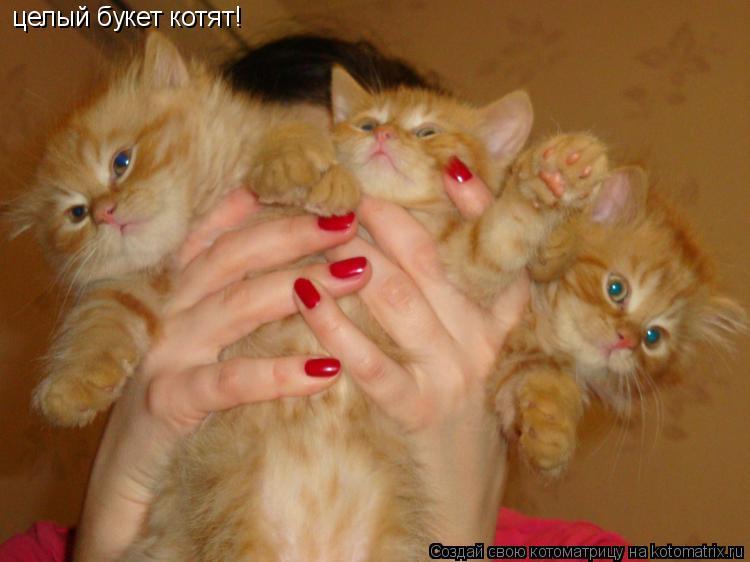 Котоматрица: целый букет котят!