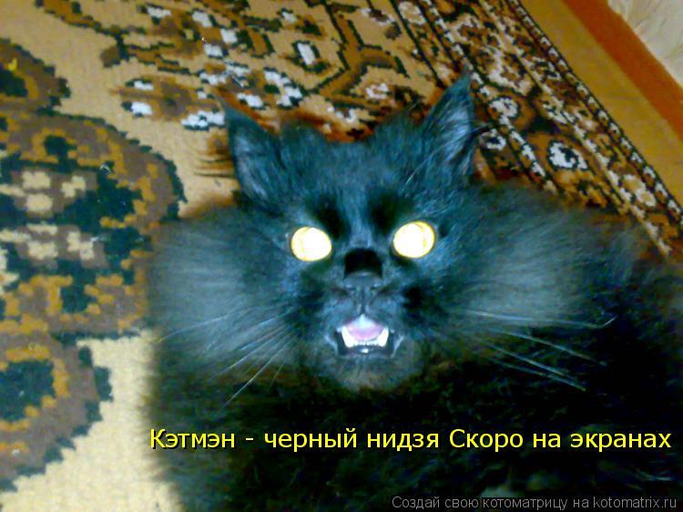 Котоматрица: Кэтмэн - черный нидзя Скоро на экранах