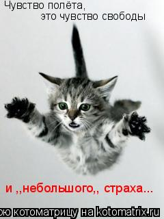 Котоматрица: это чувство свободы Чувство полёта, и ,,небольшого,, страха...