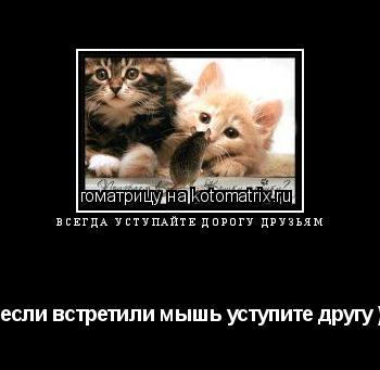 Котоматрица: всегда уступайте дорогу друзьям (если встретили мышь уступите другу )
