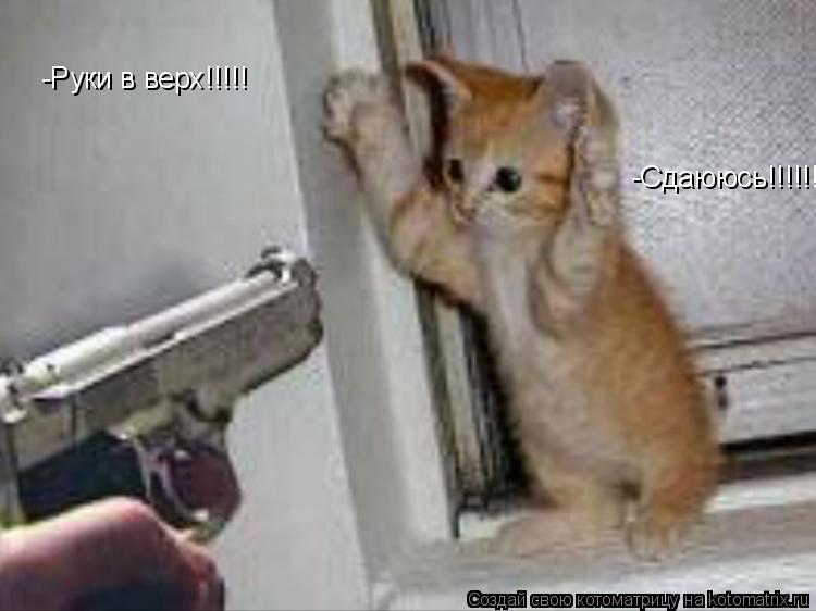 Котоматрица: -Руки в верх!!!!! -Сдаююсь!!!!!!!!!