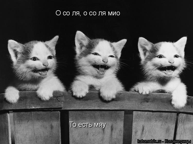 Котоматрица: О со ля, о со ля мио То есть мяу