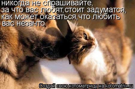Котоматрица: никогда не спрашивайте, за что вас любят,стоит задуматся, как может оказаться,что любить вас незачто