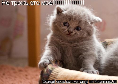 Котоматрица: Не трожь,это моё!!!!!!!!!!!!!!!!!