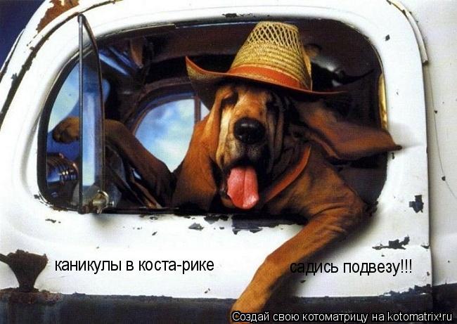 Котоматрица: каникулы в коста-рике садись подвезу!!!
