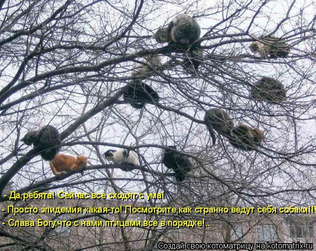 Котоматрица: - Просто эпидемия какая-то! Посмотрите,как странно ведут себя собаки!!! - Да,ребята! Сейчас все сходят с ума! - Слава Богу,что с нами,птицами,все