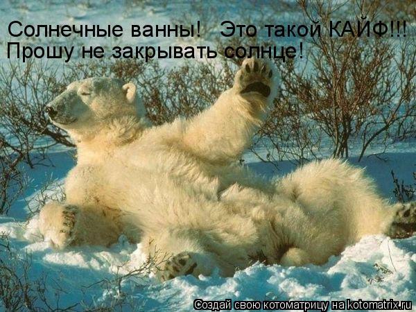 Котоматрица: Солнечные ванны!   Это такой КАЙФ!!! Прошу не закрывать солнце!