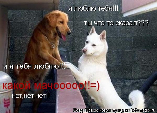 Котоматрица: я люблю тебя!!! и я тебя люблю!!! какой мачооооо!!=) ты что то сказал??? нет,нет,нет!!