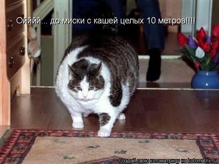 Котоматрица: Ойййй... до миски с кашей целых 10 метров!!!!