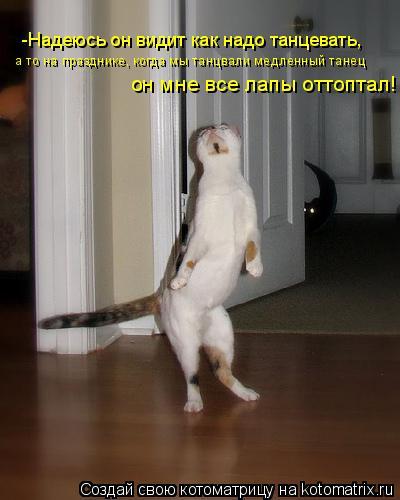 Котоматрица: -Надеюсь он видит как надо танцевать, а то на празднике, когда мы танцвали медленный танец он мне все лапы оттоптал!