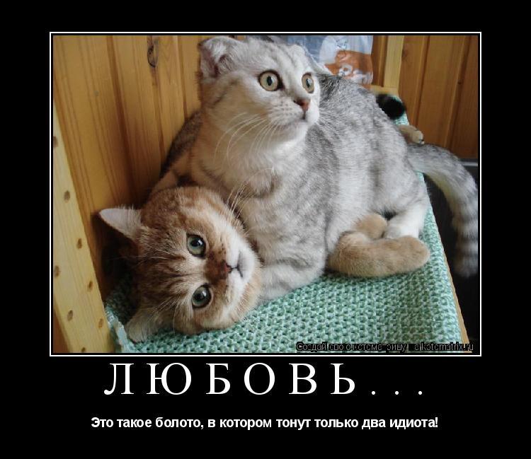 Котоматрица: Любовь... Это такое болото, в котором тонут только два идиота!