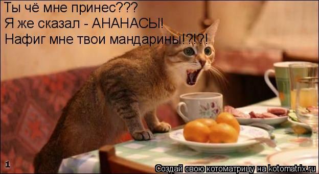 Котоматрица: Ты чё мне принес??? Я же сказал - АНАНАСЫ! Нафиг мне твои мандарины!?!?!