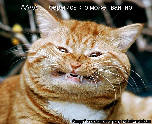 Котоматрица: АААА......берегись кто может ванпир