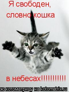 Котоматрица: Я свободен, словно кошка в небесах!!!!!!!!!!!