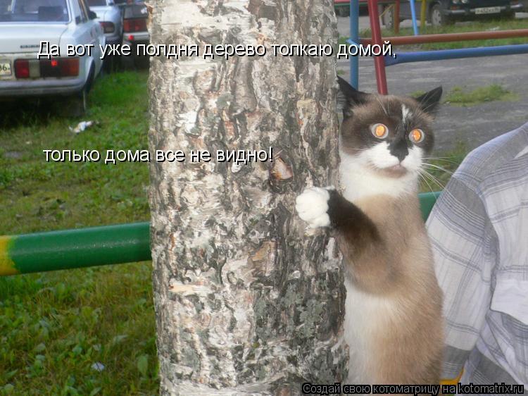 Котоматрица: Да вот уже полдня дерево толкаю домой, только дома все не видно!