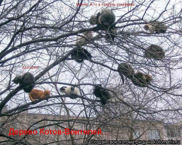 Котоматрица: Дерево Котов-Воителей... Холодно! Молчи! А то в патруль отправлю!