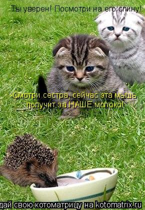 Котоматрица: -Смотри сестра, сейчас эта мышь получит за НАШЕ молоко! Ты уверен! Посмотри на его спину!