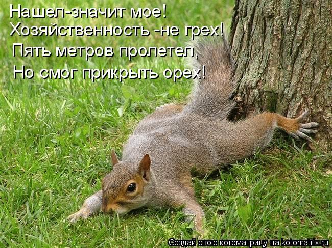 Котоматрица: Нашел-значит мое! Хозяйственность -не грех! Пять метров пролетел, Но смог прикрыть орех!