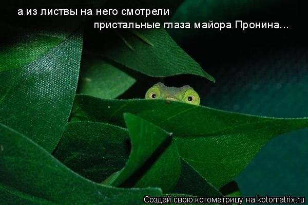 Котоматрица: а из листвы на него смотрели  пристальные глаза майора Пронина...
