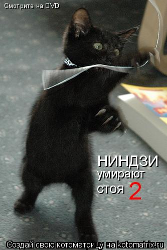 Котоматрица: Смотрите на DVD НИНДЗИ умирают стоя 2