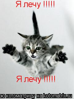 Котоматрица: Я лечу !!!!! Я лечу !!!!!