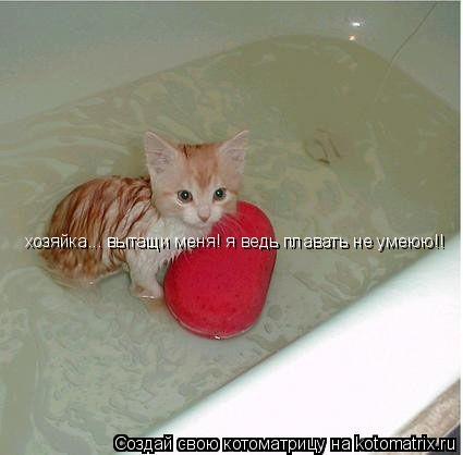Котоматрица: хозяйка... вытащи меня! я ведь плавать не умеюю!!