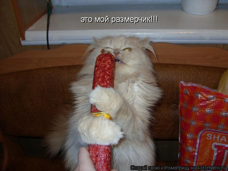 Котоматрица: это мой размерчик!!!