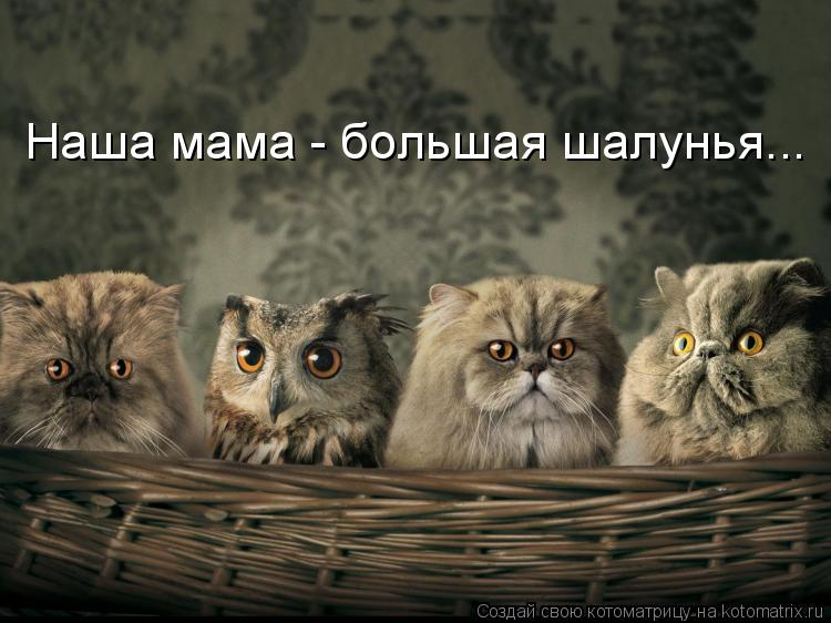 Котоматрица: Наша мама - большая шалунья...