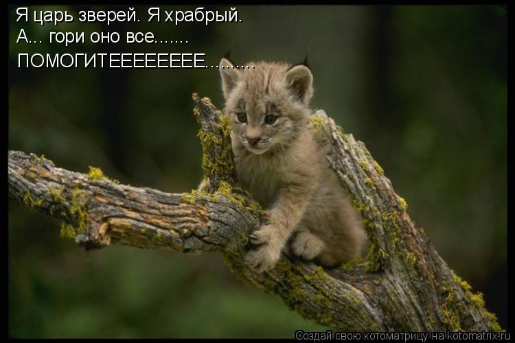Котоматрица: Я царь зверей. Я храбрый. А... гори оно все....... ПОМОГИТЕЕЕЕЕЕЕЕ..........