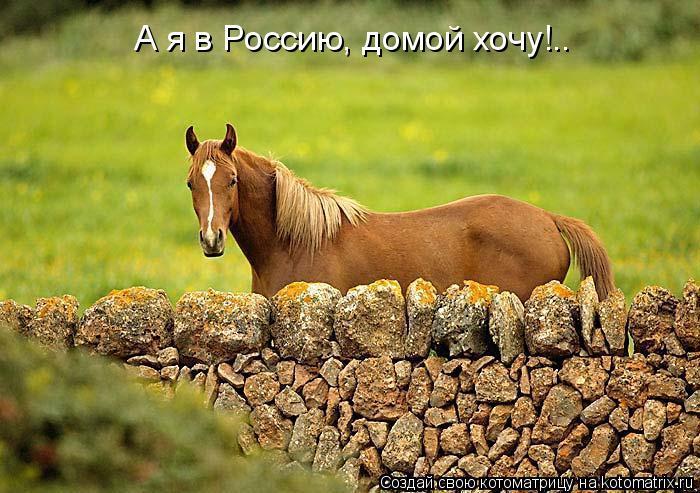 Котоматрица: А я в Россию, домой хочу!..
