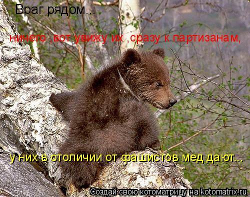 Котоматрица: Враг рядом... ничего ,вот увижу их ,сразу к партизанам,  у них в отоличии от фашистов мед дают...