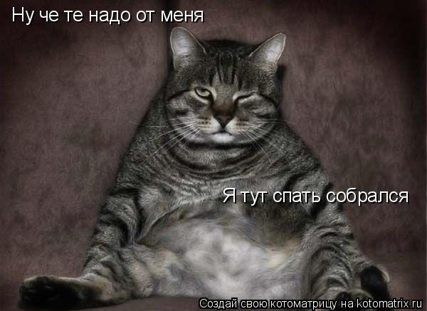 Котоматрица: Ну че те надо от меня Я тут спать собрался