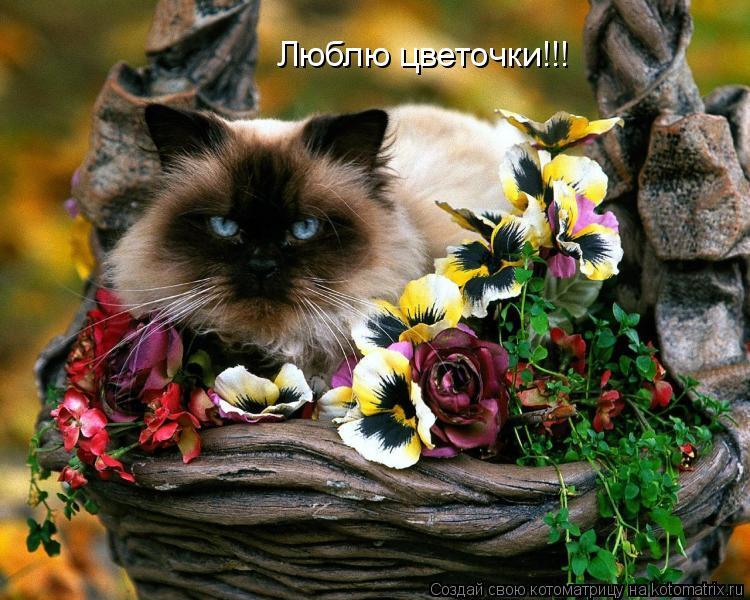 Котоматрица: Люблю цветочки!!!