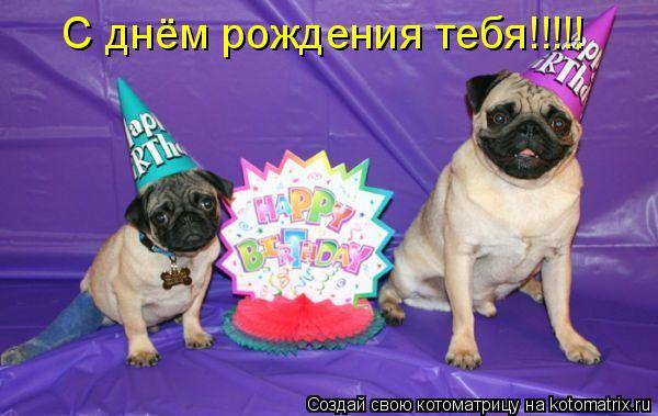 Котоматрица: С днём рождения тебя!!!!!