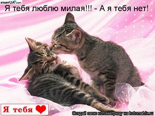 Котоматрица: Я тебя люблю милая!!! - А я тебя нет!