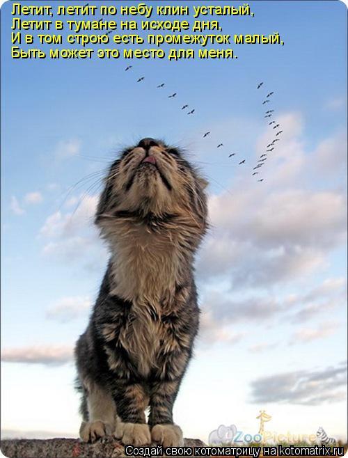 Котоматрица: Летит, летит по небу клин усталый, Летит в тумане на исходе дня, И в том строю есть промежуток малый,  Быть может это место для меня.