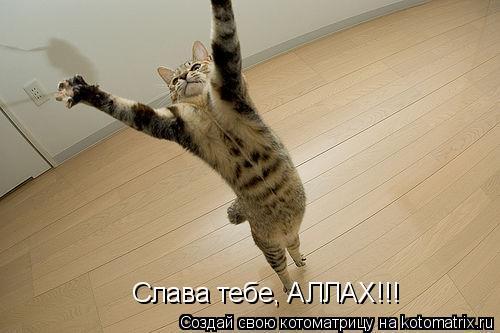 Котоматрица: Слава тебе, АЛЛАХ!!!