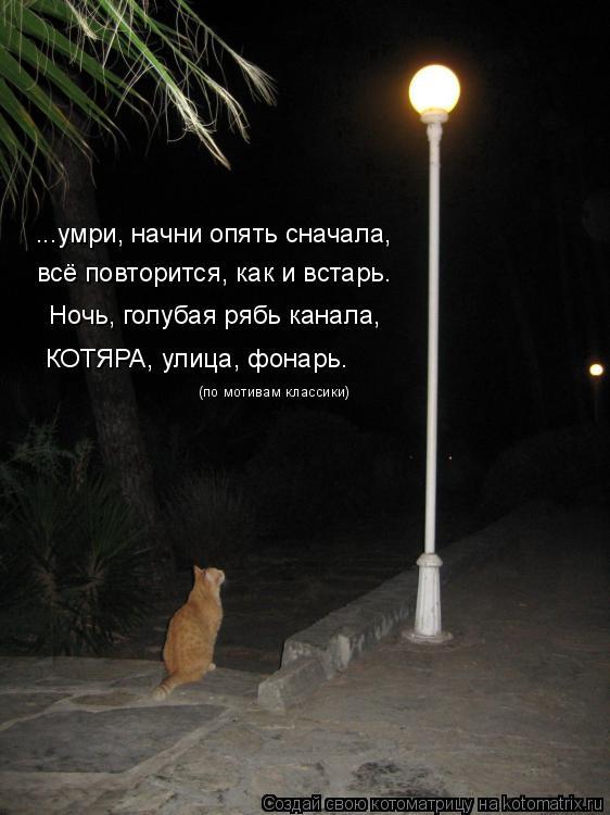 Котоматрица: ...умри, начни опять сначала, всё повторится, как и встарь. Ночь, голубая рябь канала, КОТЯРА, улица, фонарь. (по мотивам классики)