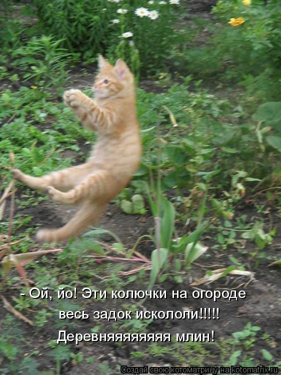 Котоматрица: - Ой, йо! Эти колючки на огороде весь задок искололи!!!!! Деревняяяяяяяя млин!