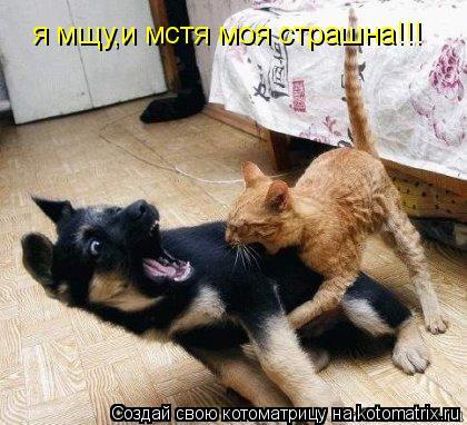 Котоматрица: я мщу,и мстя моя страшна!!!